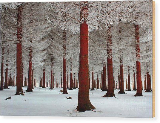 LEG Wood Print