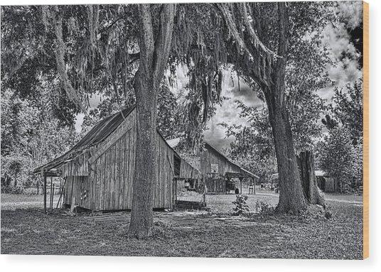 1479-86-231-bw Wood Print