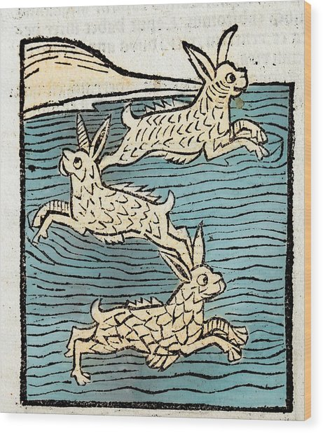 1491 Sea Hares From Hortus Sanitatis Wood Print by Paul D Stewart