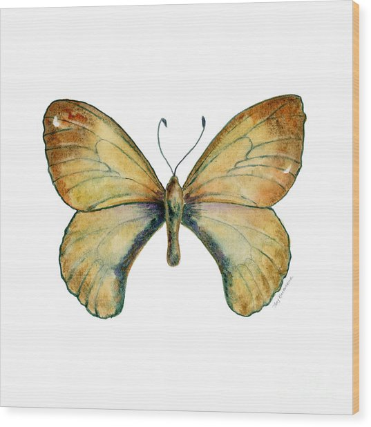 15 Clouded Apollo Butterfly Wood Print