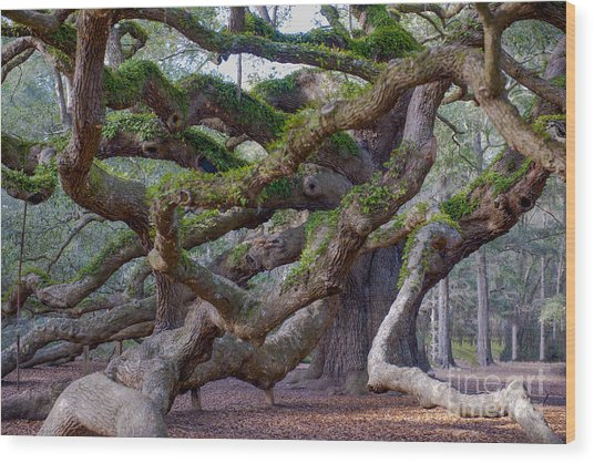 Angel Oak Tree Unique View Wood Print