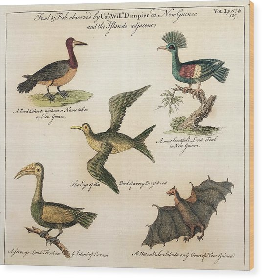 1735 William Dampier Birds Of The Pacific Wood Print