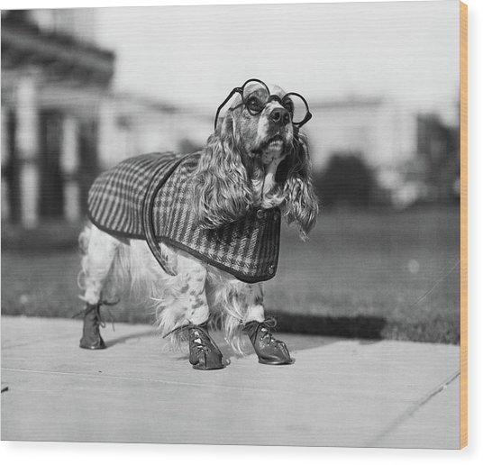 1930s Cocker Spaniel Wearing Glasses Wood Print