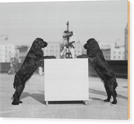 1930s Two Black Cocker Spaniels Wood Print