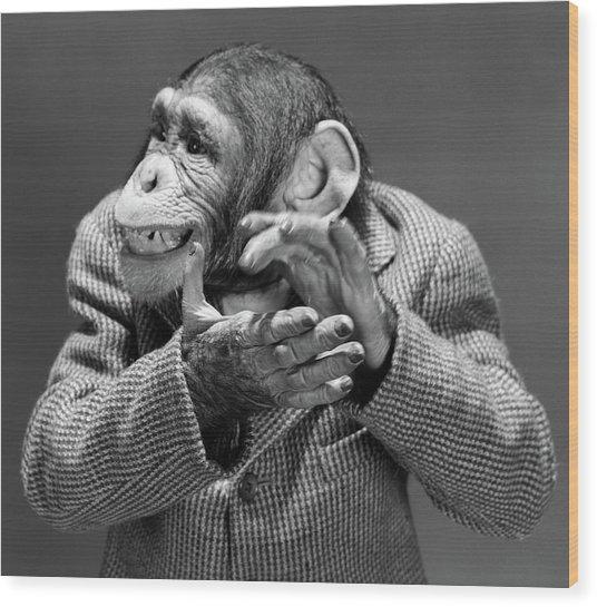 1950s 1960s Monkey Chimp Chimpanzee Wood Print