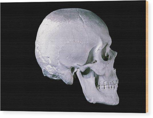 19th Century Model Of A Human Skull Wood Print