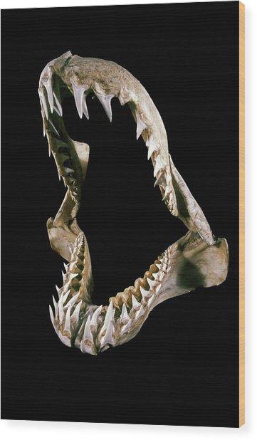 19th Century Shark Jaw Wood Print by Patrick Landmann/science Photo Library