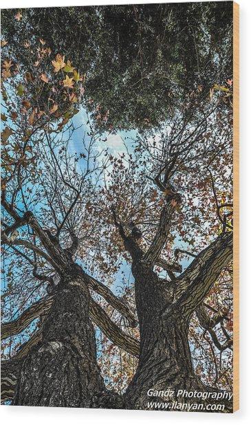 1st Tree Wood Print