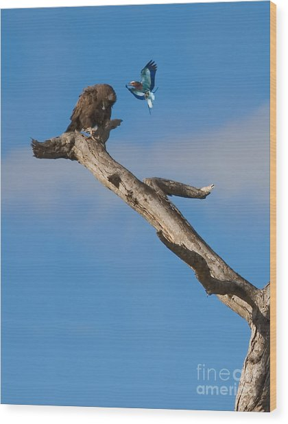 A Confrontation Wood Print