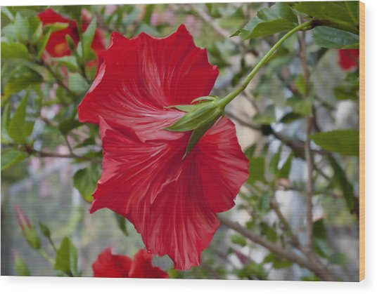 Abstract Hibiscus Wood Print