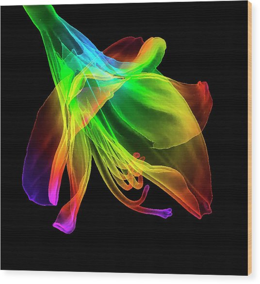 Amaryllis (hippeastrum Sp.) Flower Wood Print by K H Fung/science Photo Library