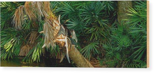 Anhinga Anhinga Anhinga On A Tree Wood Print