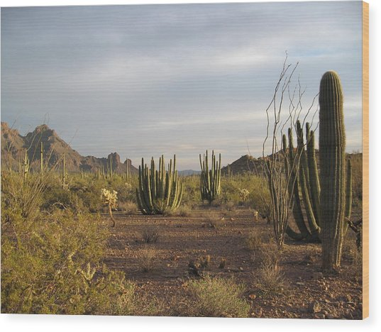 Arizona Desert Wood Print