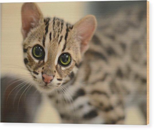 Asian Leopard Cub Wood Print