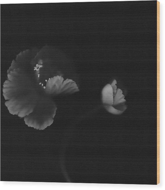Autographic Poppies Wood Print