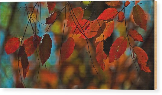 Autumn Magic Wood Print