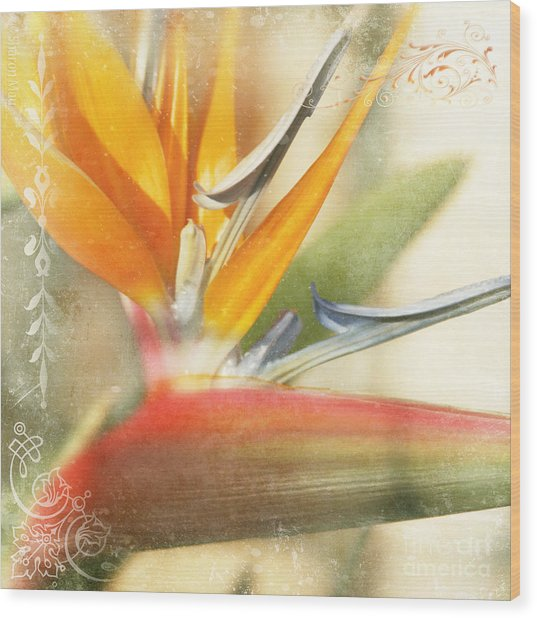 Bird Of Paradise - Strelitzea Reginae - Tropical Flowers Of Hawaii Wood Print