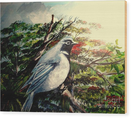 Black-throated Robin  Wood Print