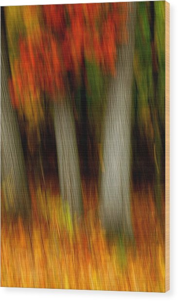Blazing In The Woods Wood Print