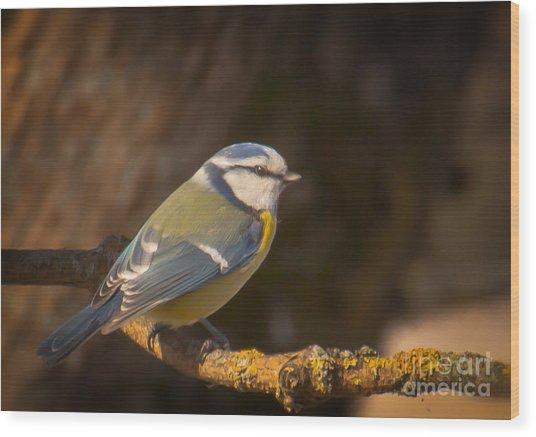 Blue Tit Wood Print by Sylvia  Niklasson