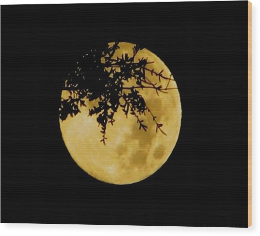 Branched Wood Print