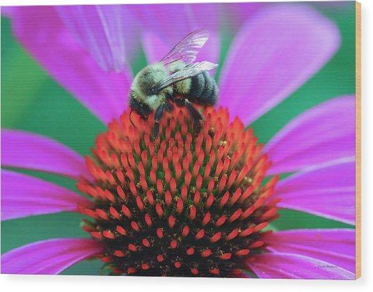 Bumblebee On Flower Wood Print