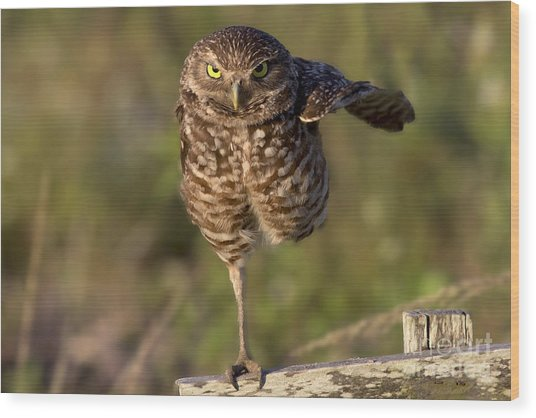 Burrowing Owl Photograph Wood Print