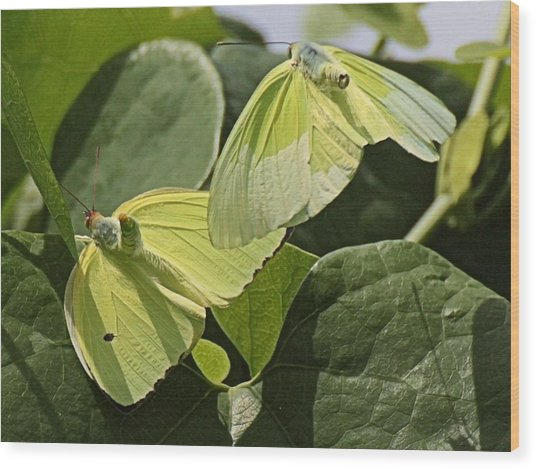 Butterfly Love Wood Print by Dart and Suze Humeston