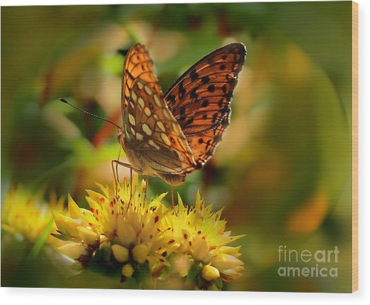 Butterfly Wood Print by Sylvia  Niklasson