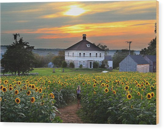 Buttonwood Farm Wood Print