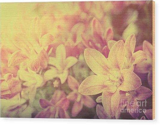 Campanula Floral Background Wood Print by Mythja  Photography