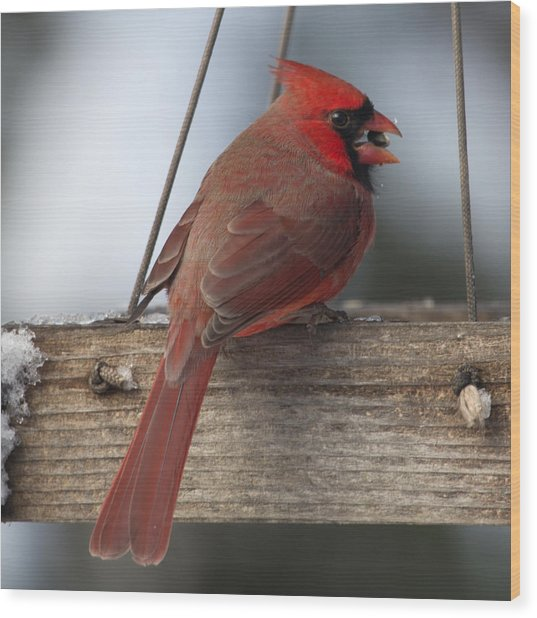 Cardinal Wood Print by John Kunze