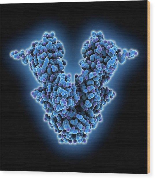 Caspase-activated Dnase Molecule Wood Print by Laguna Design