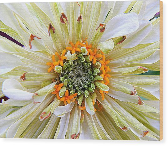 Chrysanthemum Fall In New Orleans Louisiana Wood Print
