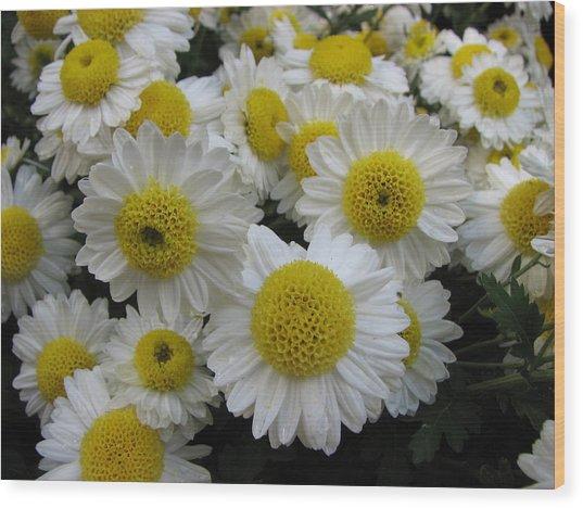 Daisy Like Flowers 1 Wood Print