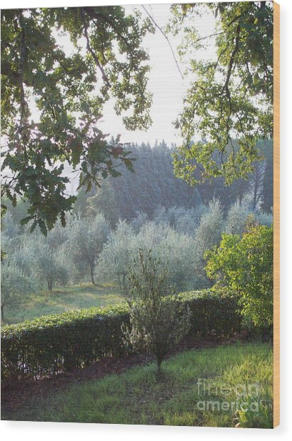 Dawn In Loppiano Wood Print