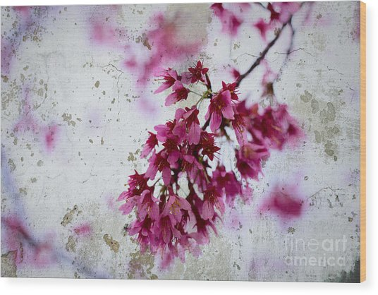 Deep Pink Flowers With Grey Concrete Texture Background Wood Print