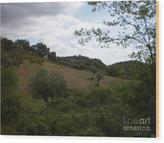 Dehesa In Extremadura Wood Print
