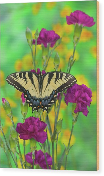 Eastern Tiger Swallowtail Papilio Wood Print