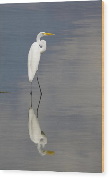 Egret Standing Wood Print