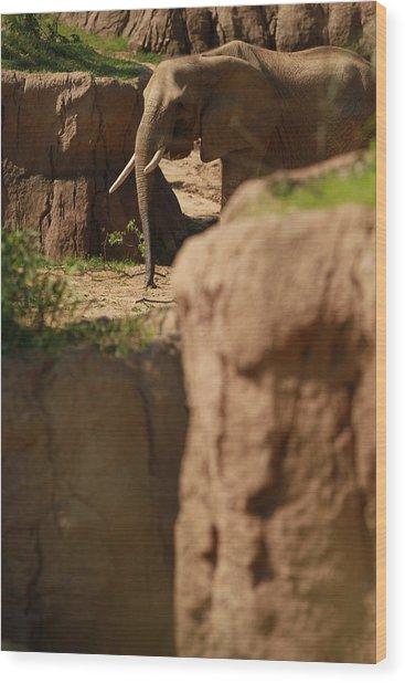 Elephant Wood Print by Tinjoe Mbugus