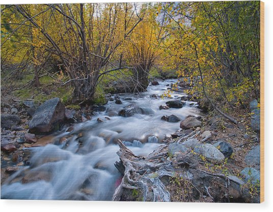 Fall At Big Pine Creek Wood Print