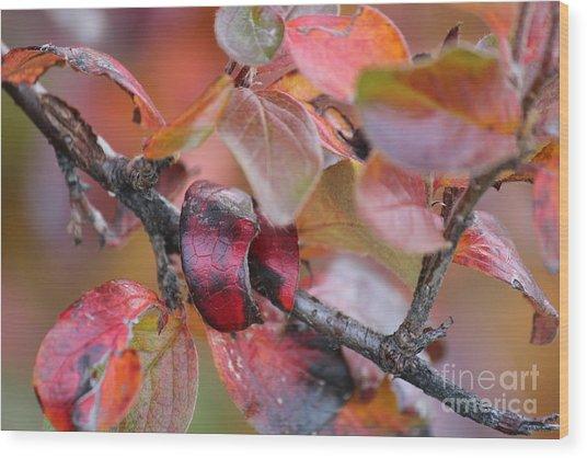 Fall Leaves Wood Print