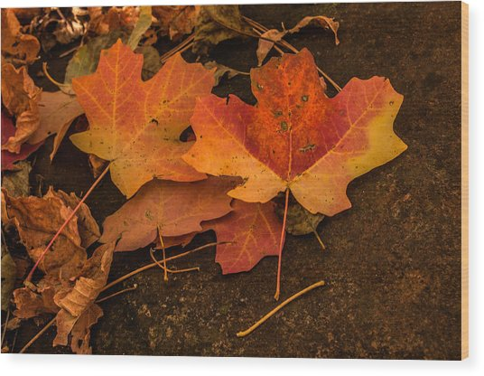 West Fork Fallen Leaves Wood Print