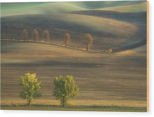 Fields... Wood Print