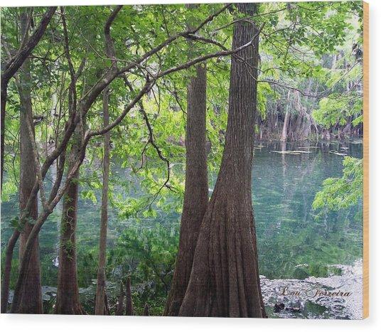 Florida Springs Wood Print