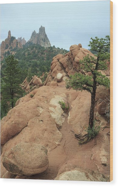 Garden Of The Gods At Daybreak Wood Print
