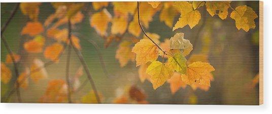 Golden Fall Leaves Wood Print