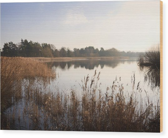Golden Reeds Wood Print by Shirley Mitchell