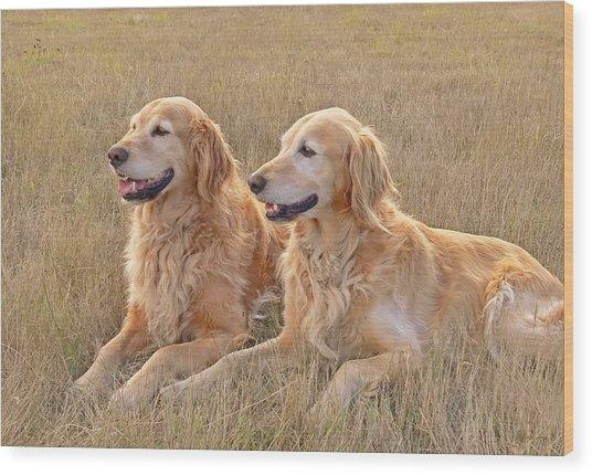 Golden Retrievers In Golden Field Wood Print